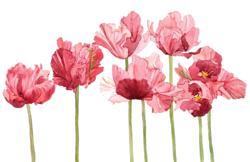 Flower tumblr png. Transparent flowers google search