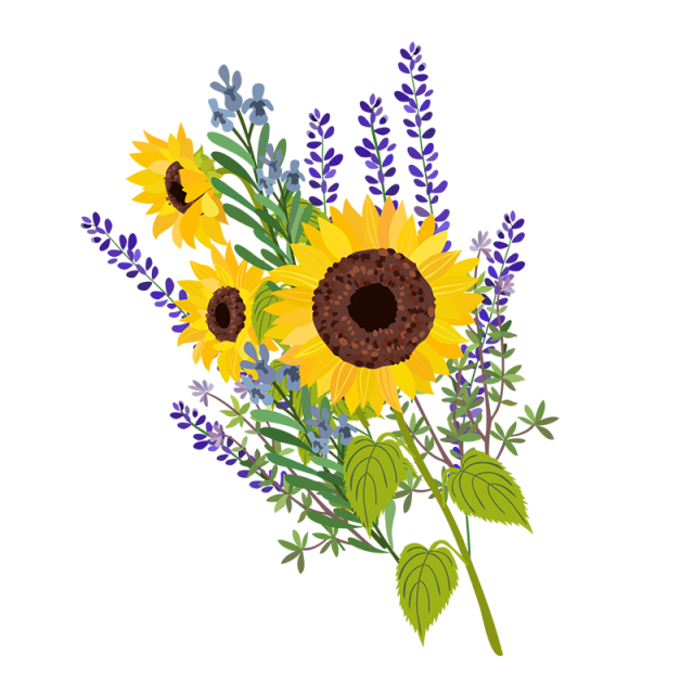 Vector floral png. Sun flower and psd