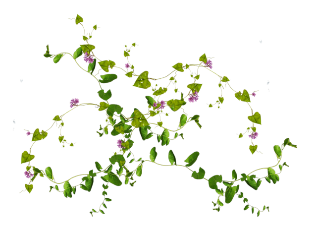 Flower vines png. Free plants flowers