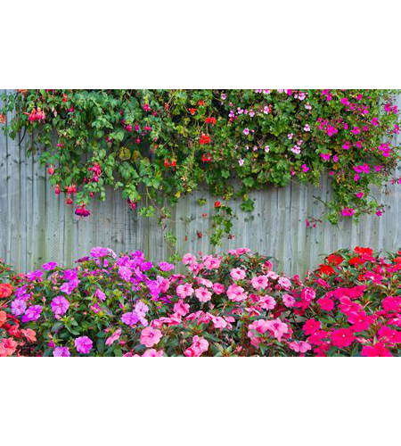 Flower wall png. Colour my with flowers