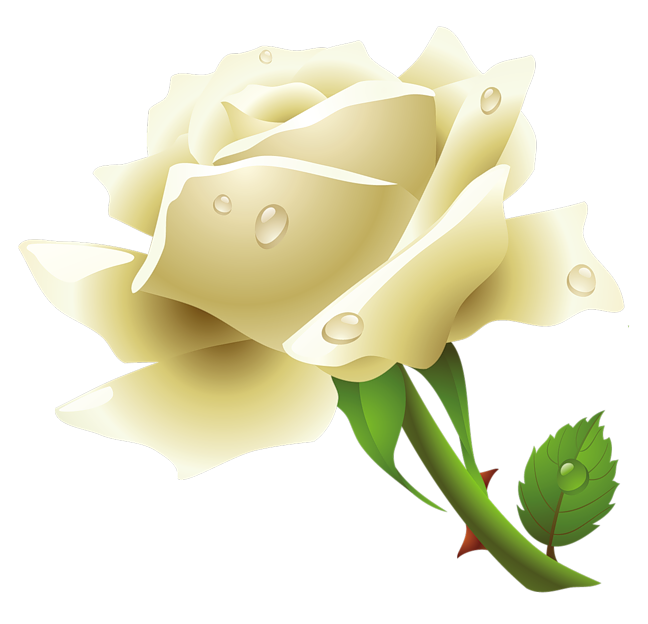 Flower white png. Roses images free download