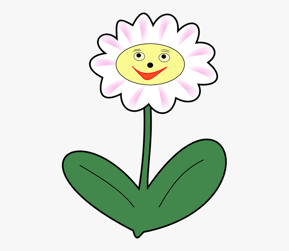 Flower with face. Daisy plant happy spring