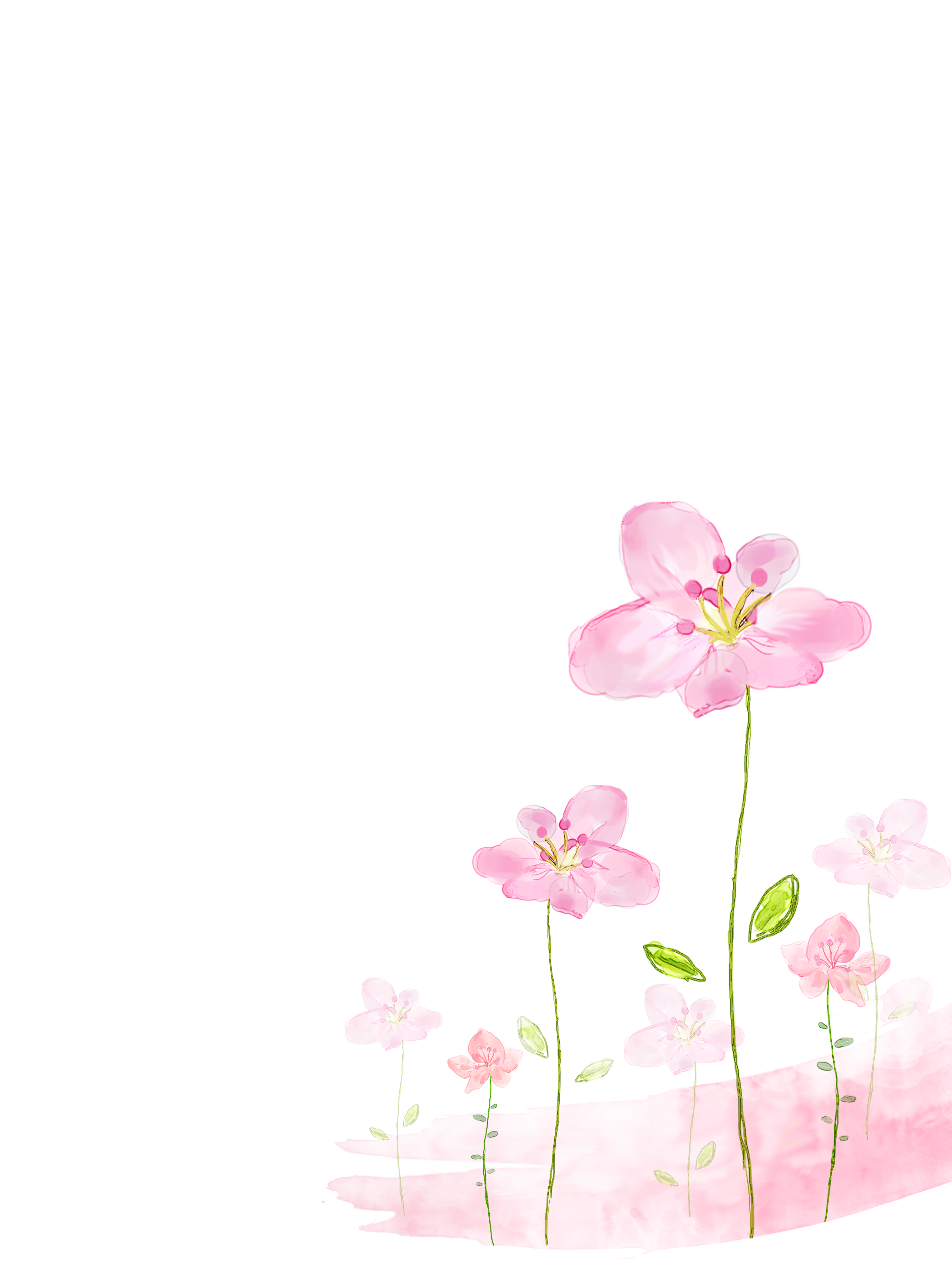 Flowers background png. Watercolor painting flower pink