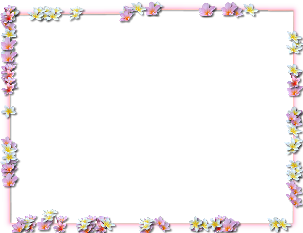 Floral borders png. Flowers pic