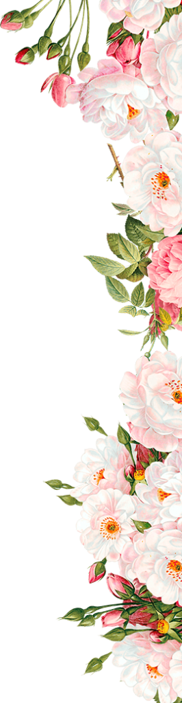 Flowers border png. Free image peoplepng com