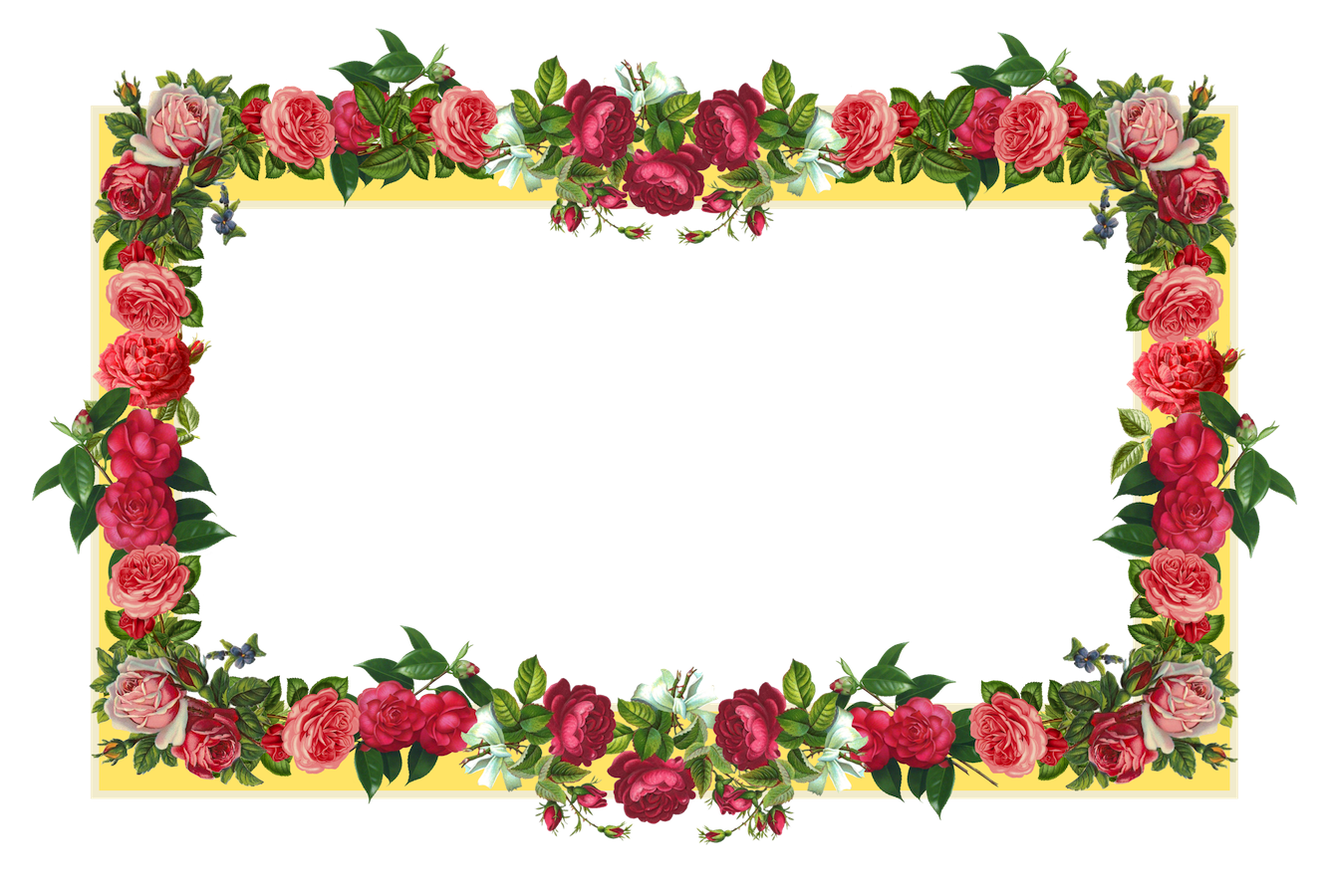 Flowers borders png. Images