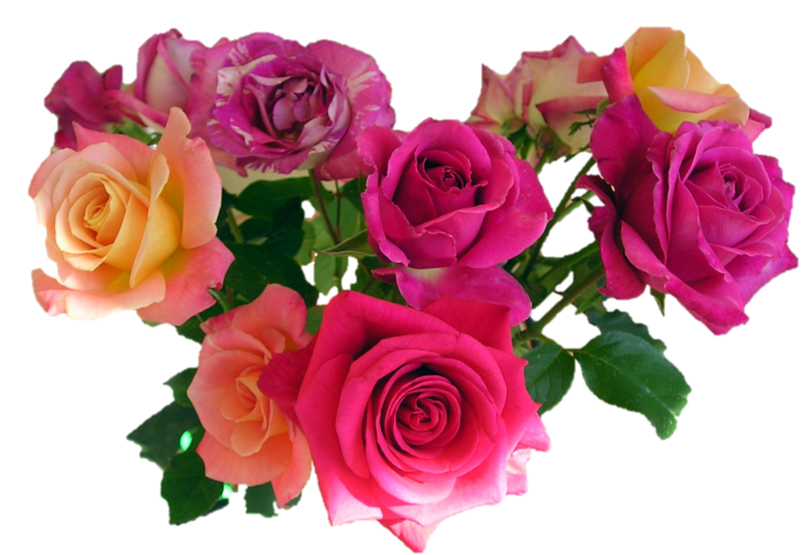 Rose flowers png. Bouquet of images free