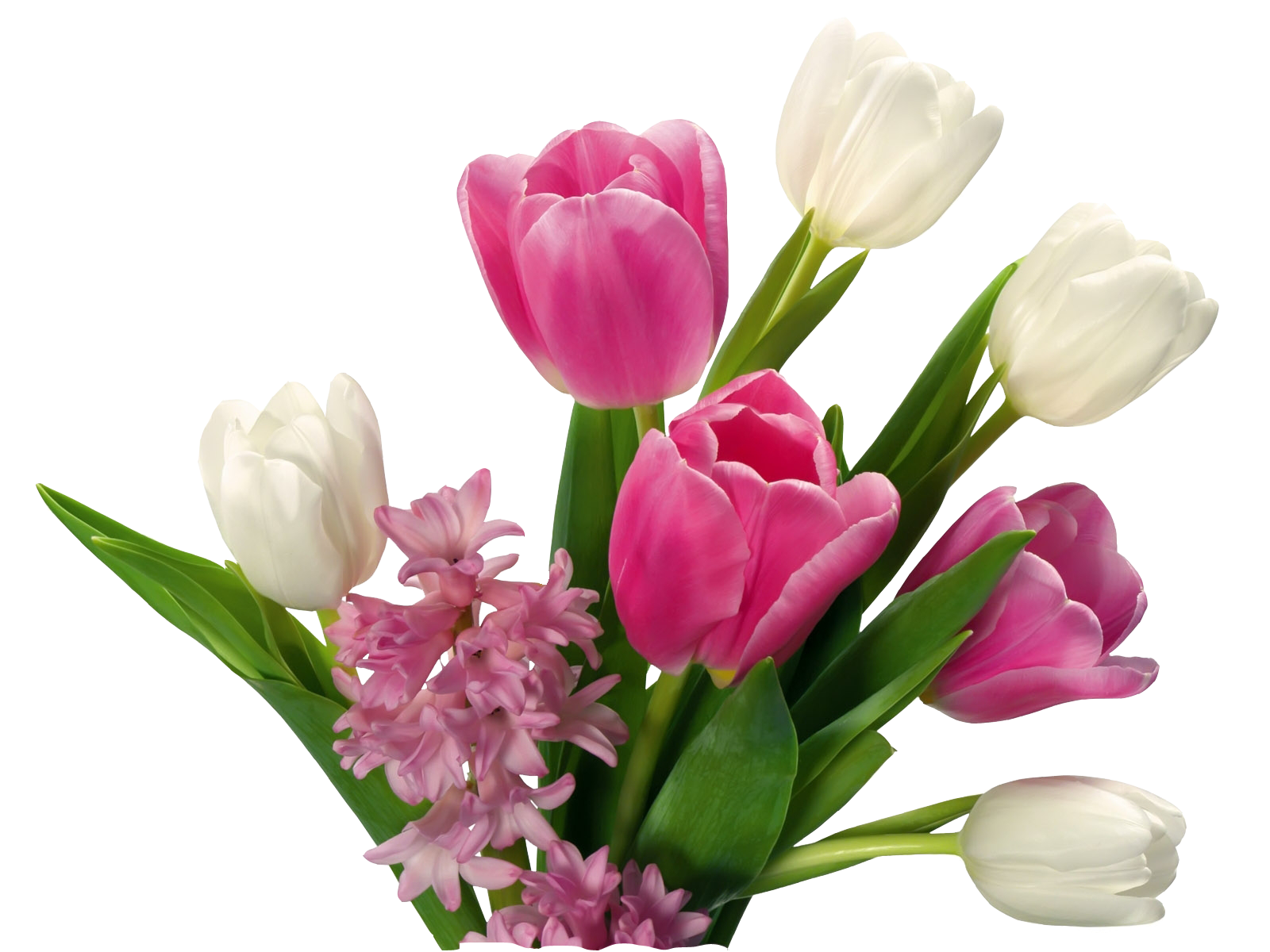 Vector bouquet tulip. Flower png images free