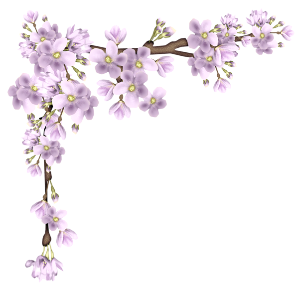 Flowers branch png. Pink spring picture card