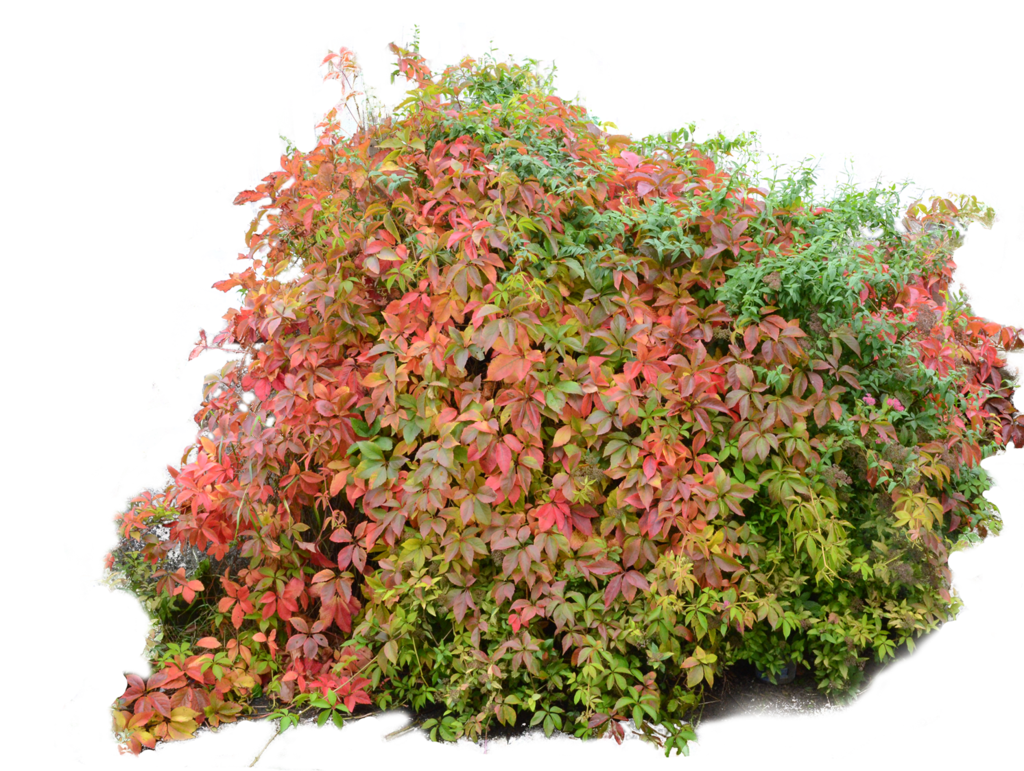 Flowers bushes png. Bush autumn fall by