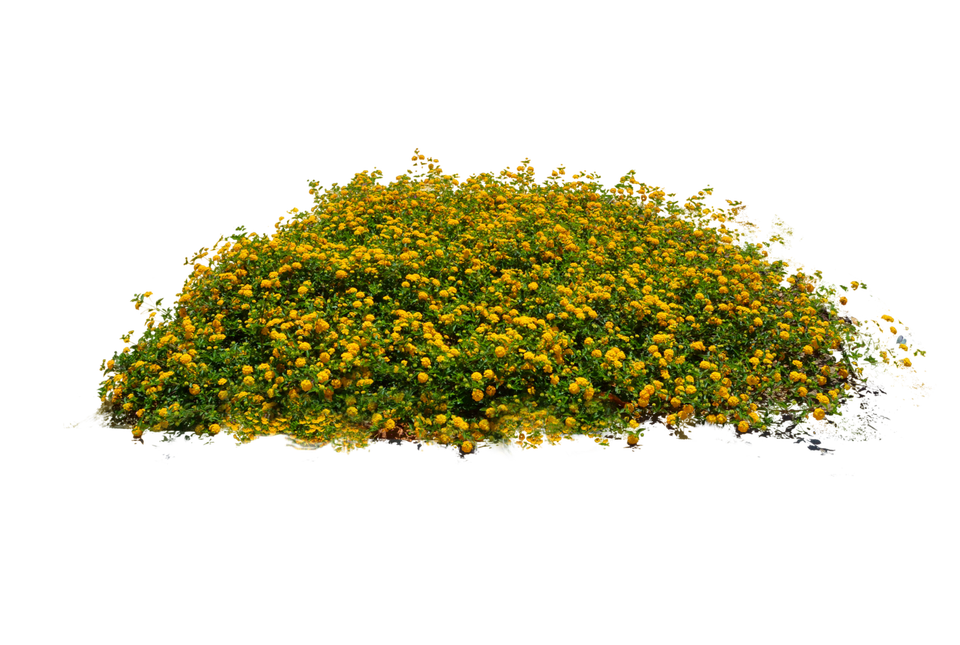 Flowers bushes png. Free plants images