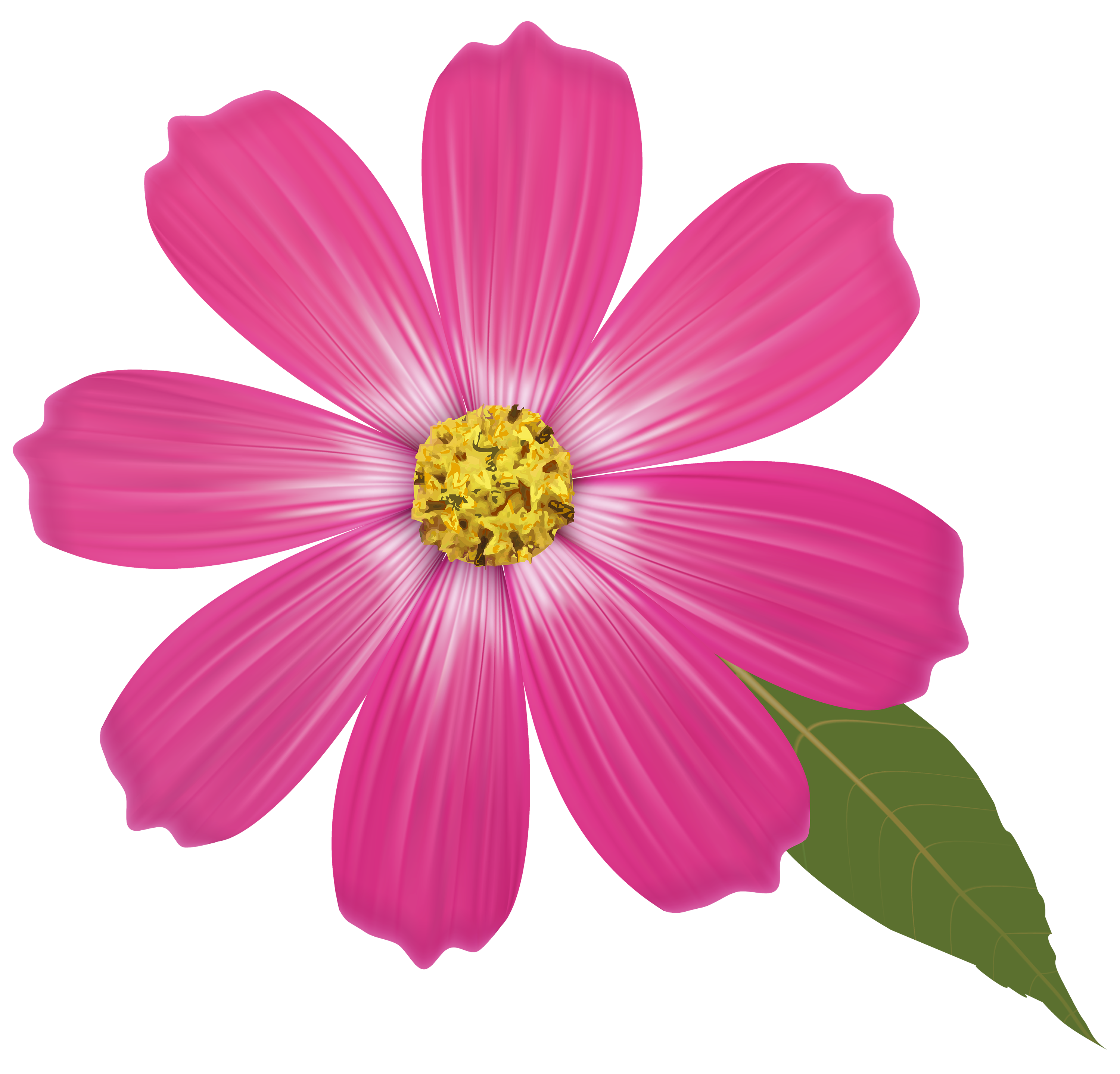 free clip art flowers transparent png clipart images free - HD3000×2878