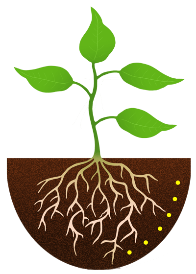 Flowers clipart root. Free flower roots cliparts