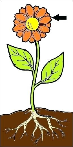 Flowers clipart root. Flower with roots plant