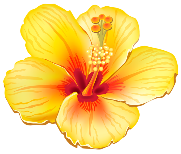 Hawaiian flowers png. Yellow exotic flower clipart