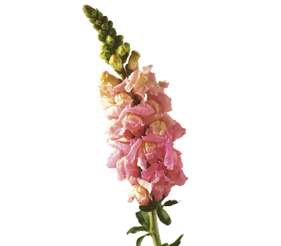 Flowers crown png. What to expect when