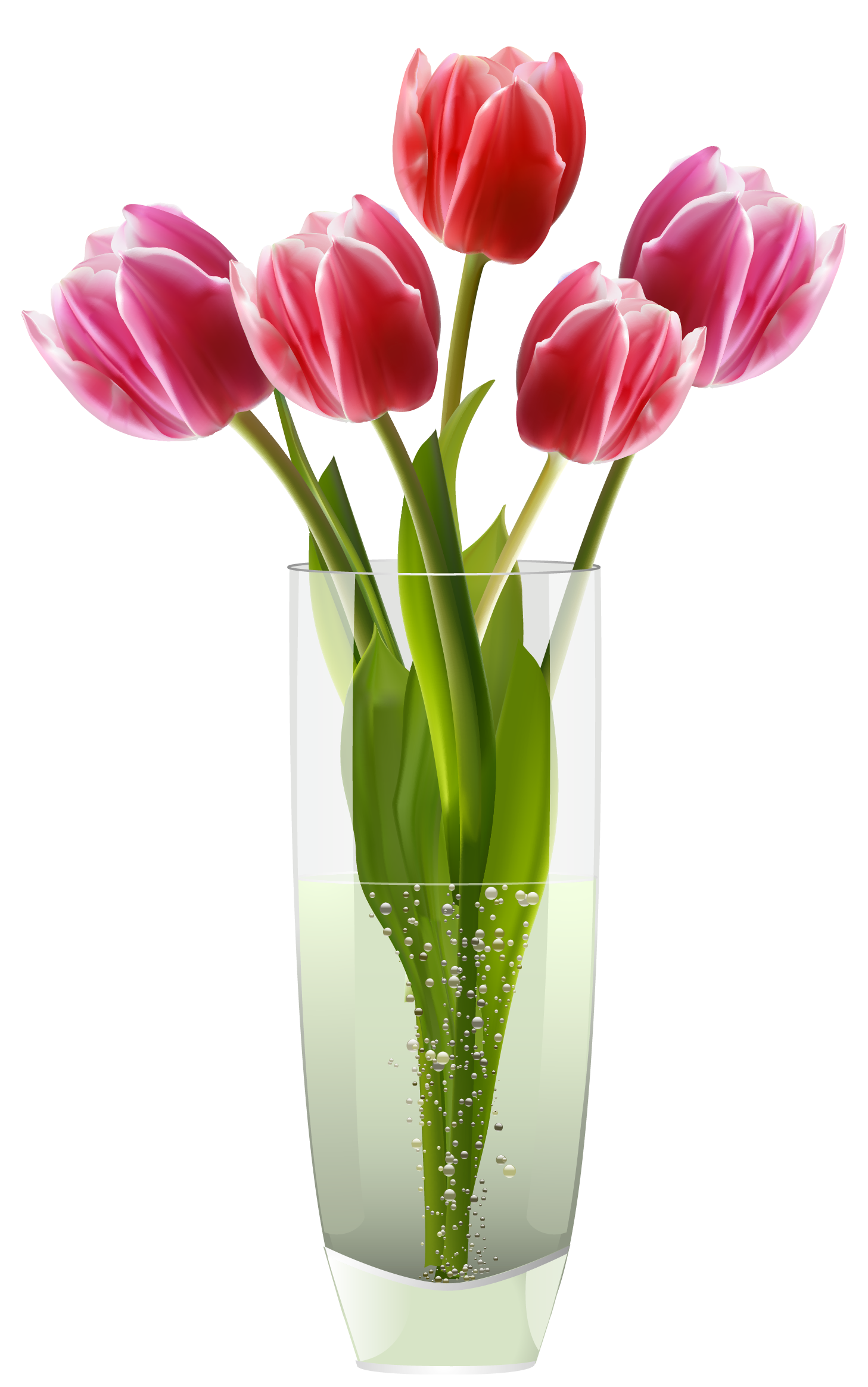 Flower vase png. Pink red tulips clipart