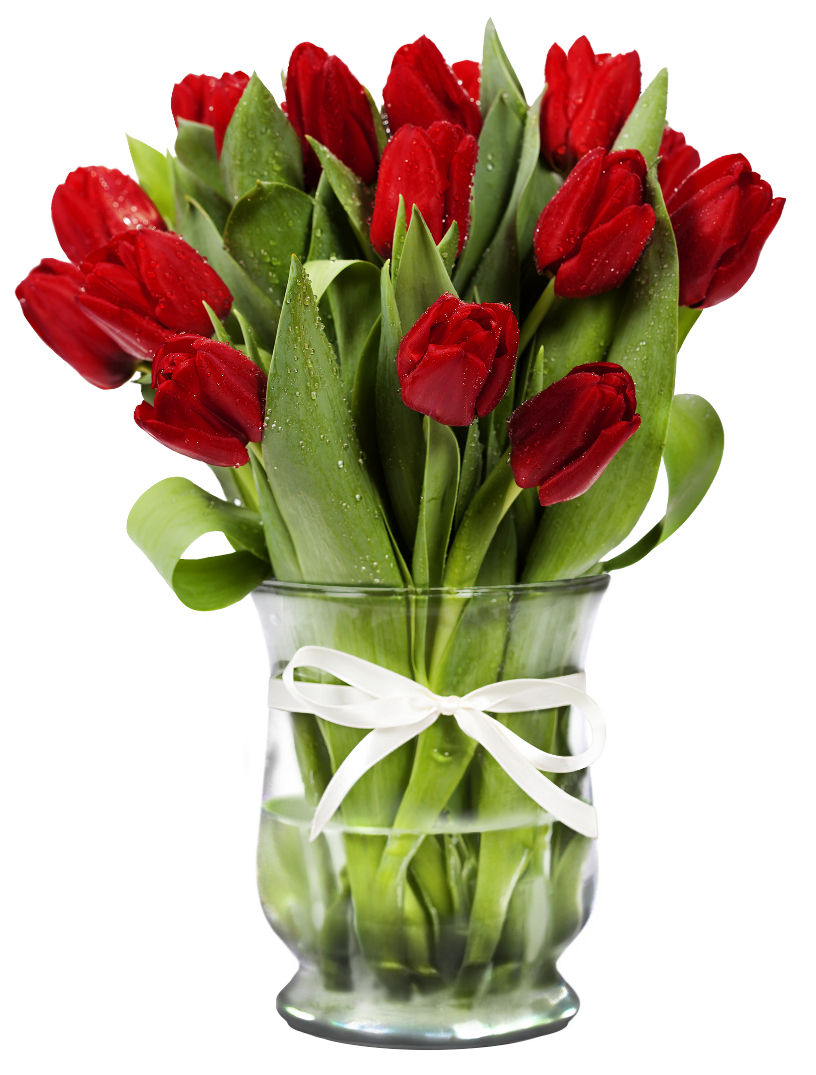 Tulip transparent vase clipart. With red tulips gallery