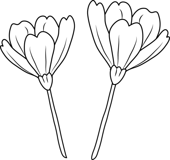 Flowers outline png. Simple flower line drawing