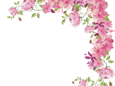 Flowers png. Watercolor vector clipart psd