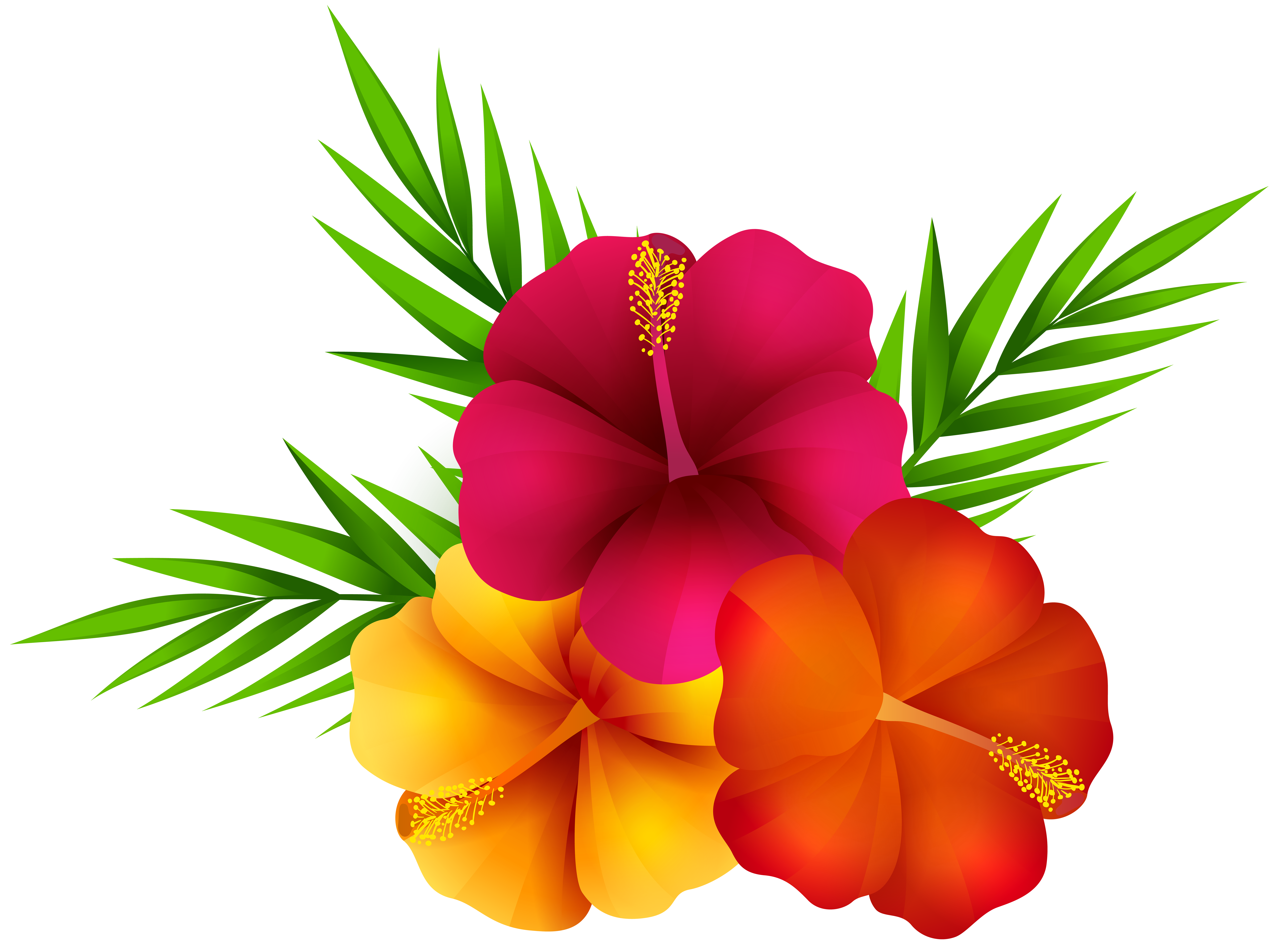 Flowers png. Exotic clip art image