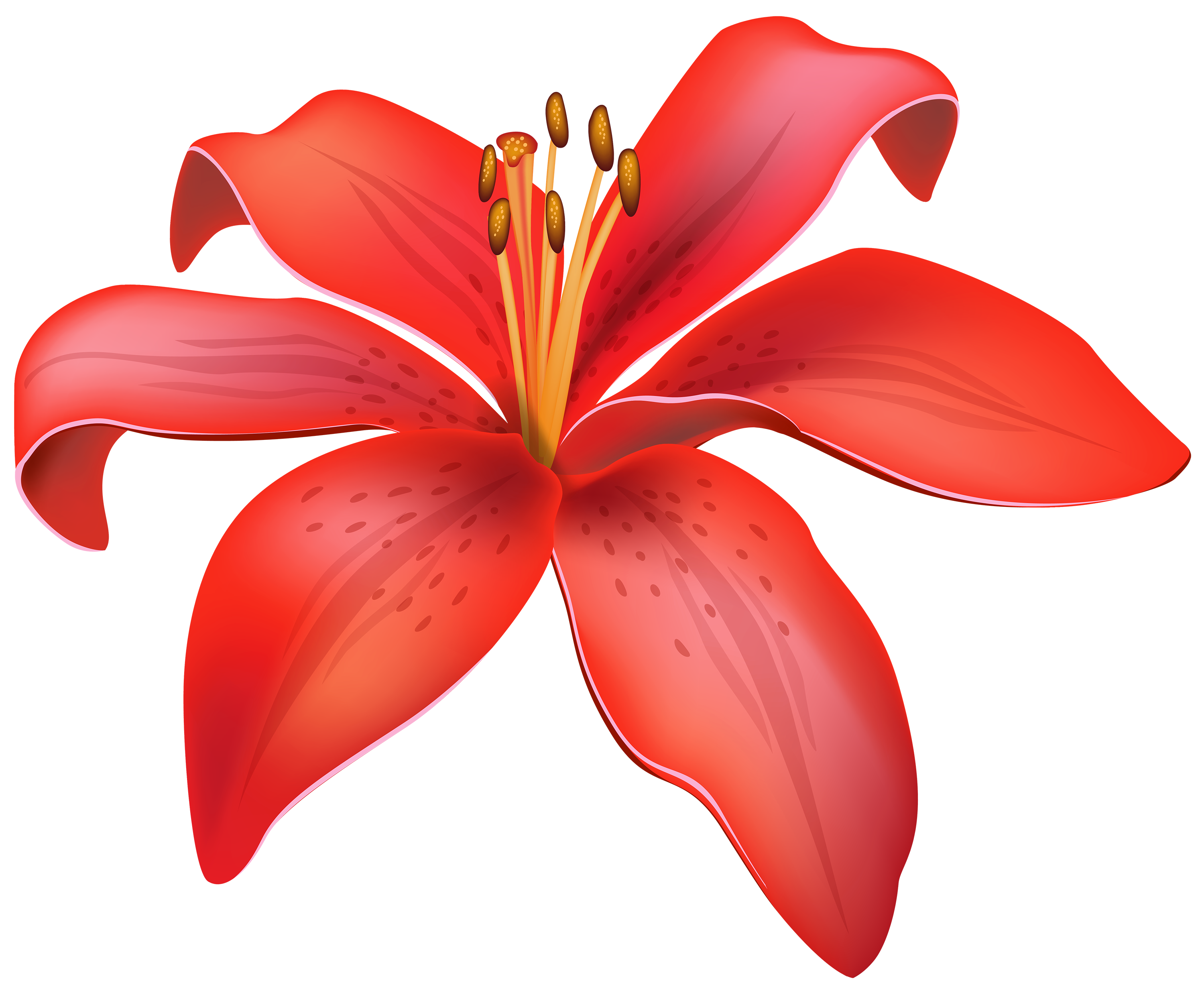Flowers png clipart. Red lily flower best