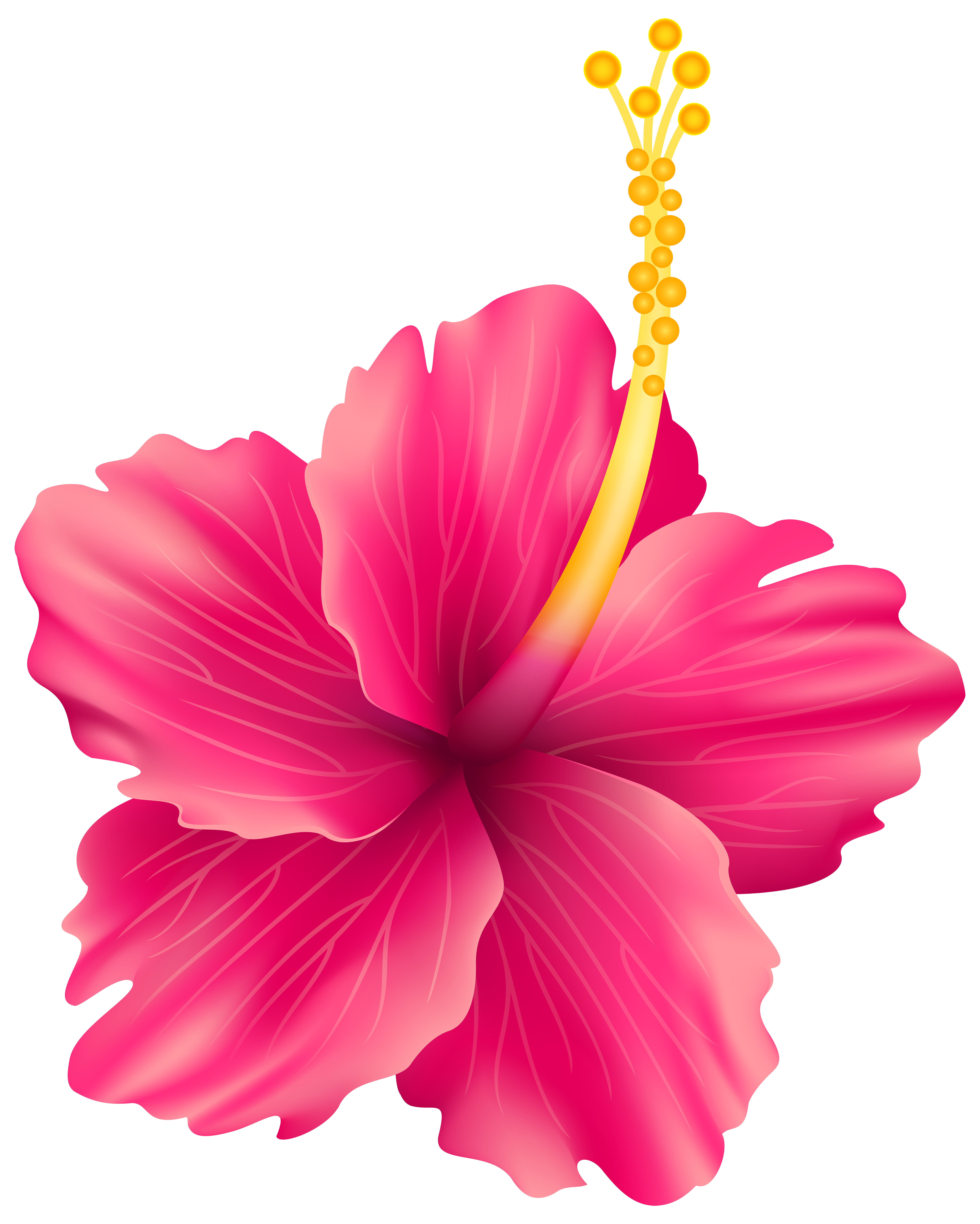 Flowers png transparent background. Pink exotic flower clip