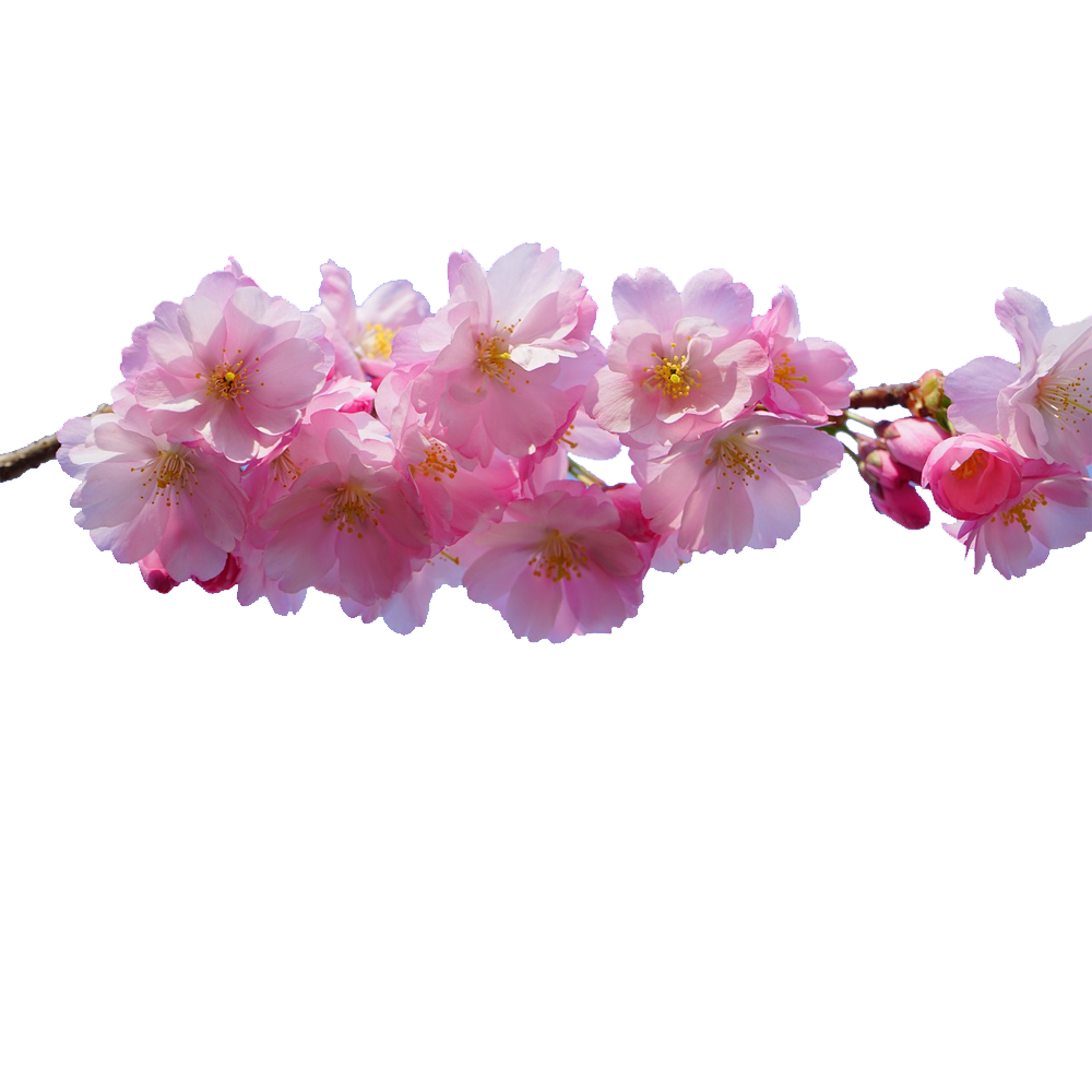 With free download pngies. Flowers png transparent background clip free library