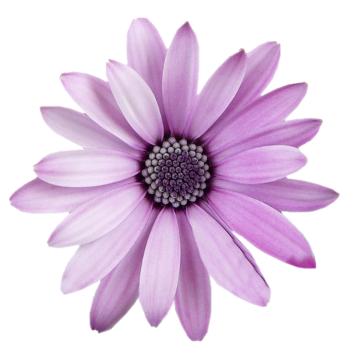 Flowers png transparent background. Freetoedit flower with