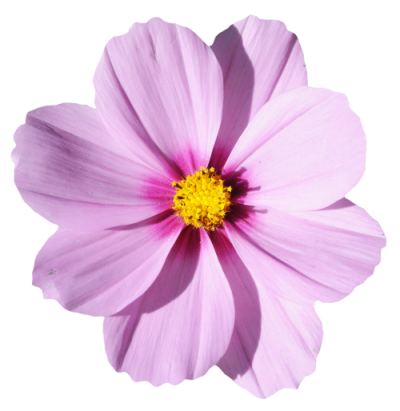 Download flower free image. Flowers transparent png image library stock