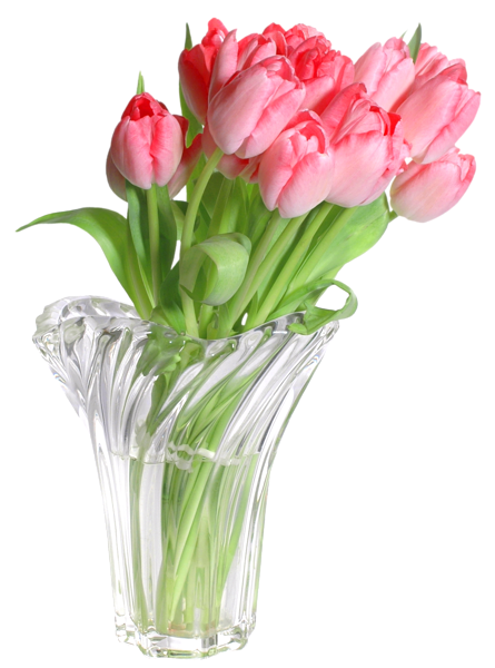 Tulip transparent vase clipart. Pink tulips in png