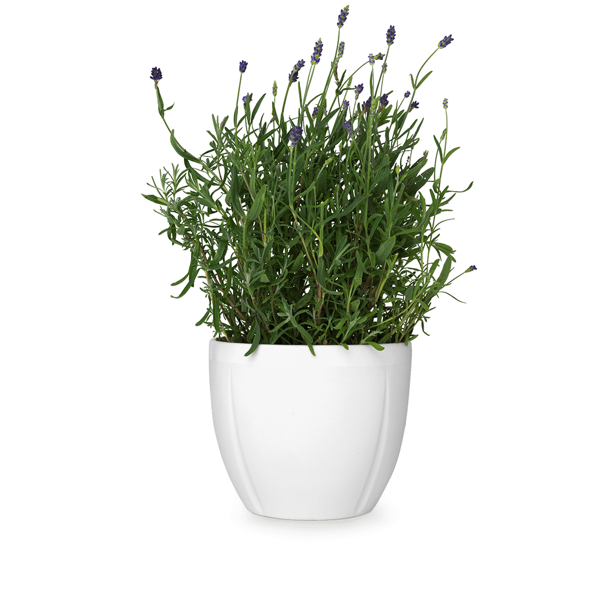 Potted plants png. Flower pot transparent images