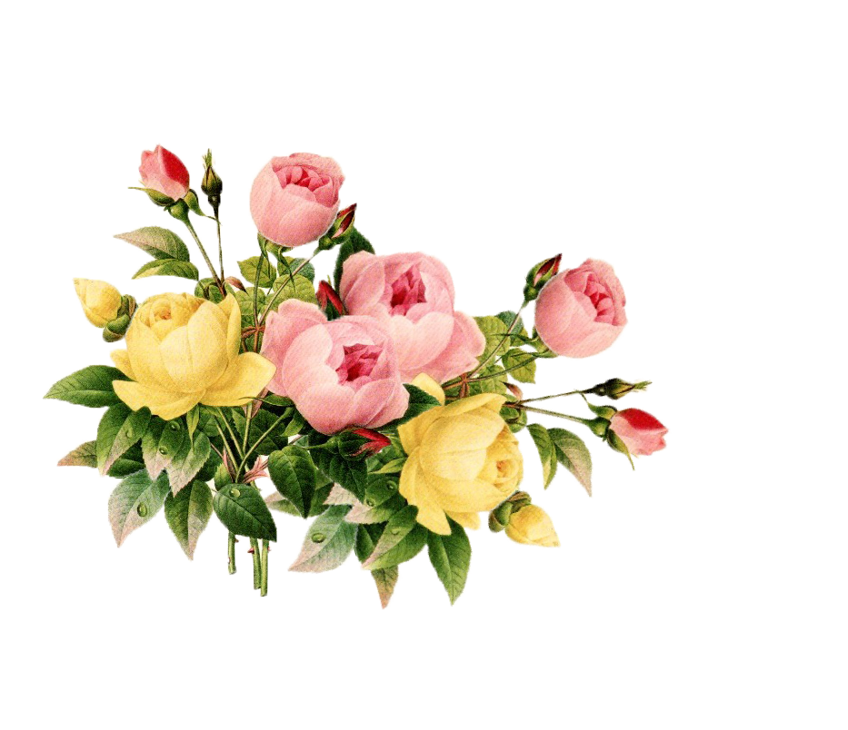 Flowers vintage vector png. Free flower cliparts download