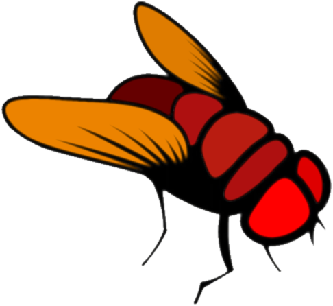 Fruit fly png. Download cartoon image with