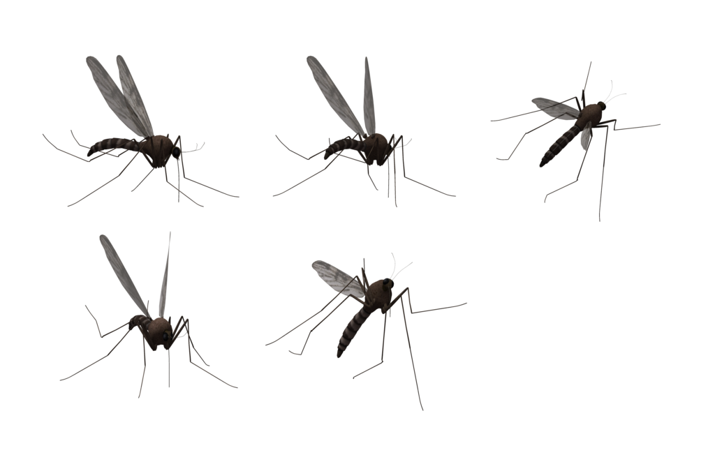 vector mosquitoes transparent background