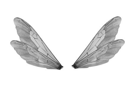 Fly wings png. Silver by jinxmim pinterest