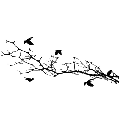 Flying bird silhouette png. Transparent stickpng silhouettes on