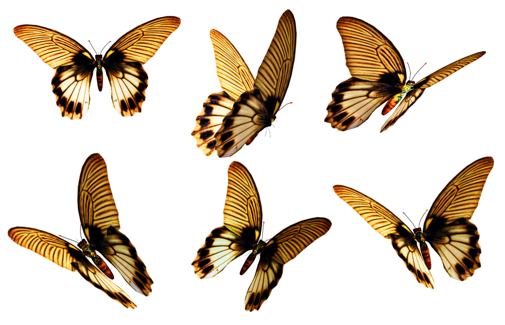 Flying butterflies png. Stock by roy d
