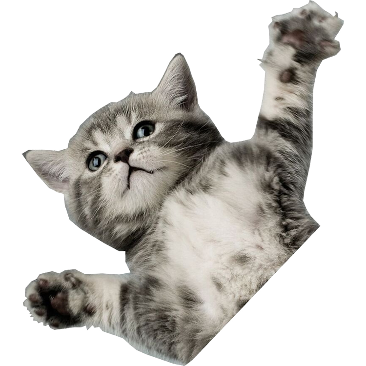 flying cat png