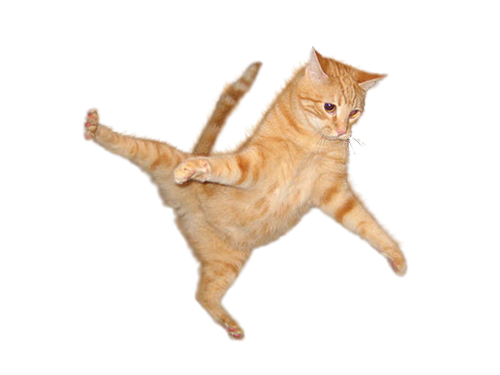 Kitty transparent bg. Flying cat png free