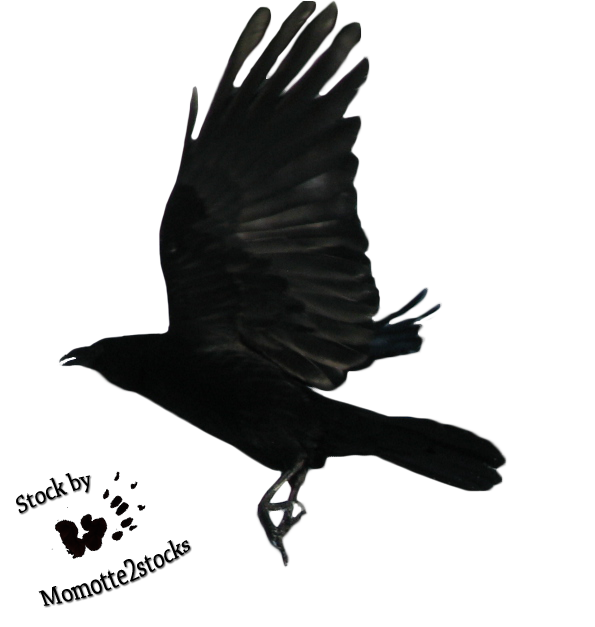 Flying crow png. Download free black and