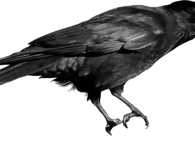 Flying crow png. X carwad net