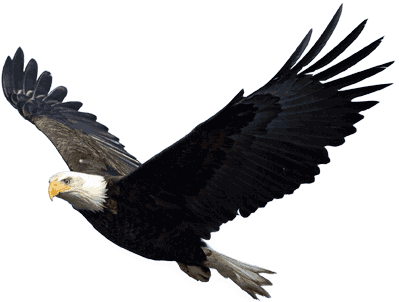 Flying transparent stickpng. Eagle png vector library library