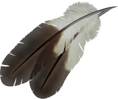 Flying feathers png. Download feather free transparent