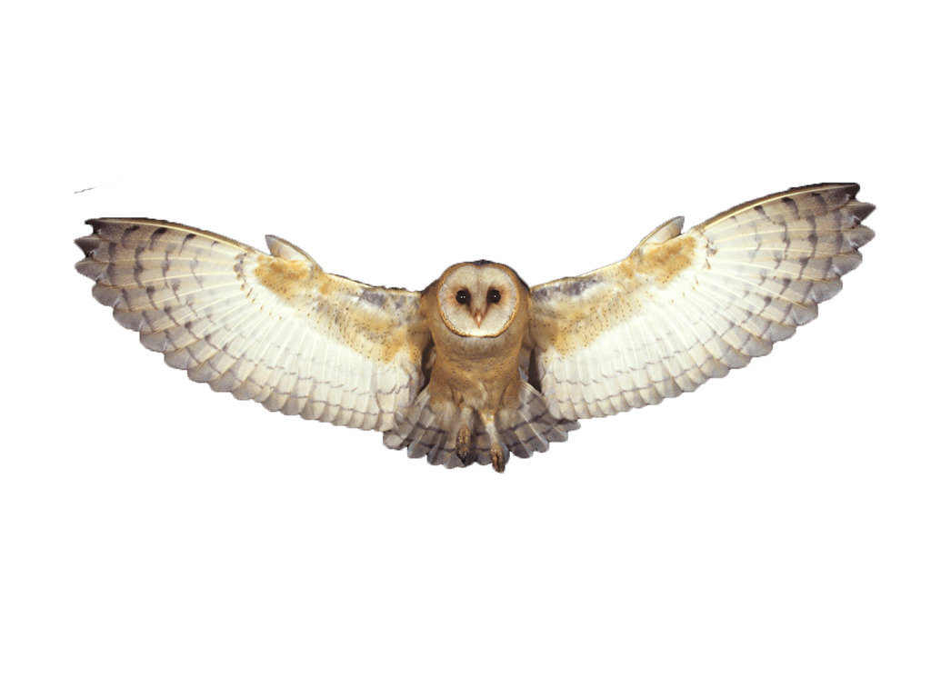 Owl flying png. By summerwinterdreams on deviantart