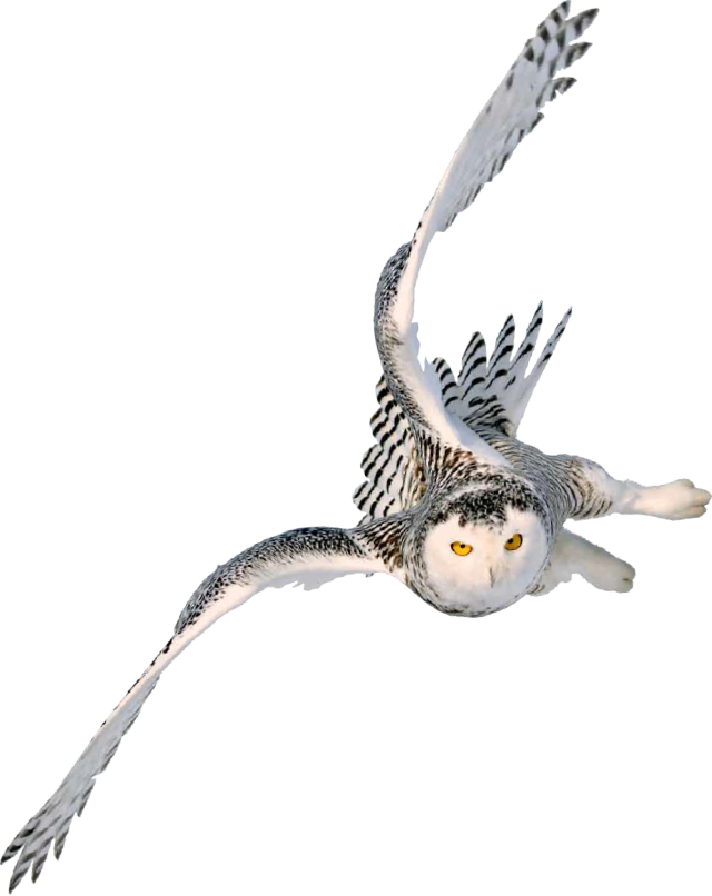 Flying owl png. Sapere research group flyingowl
