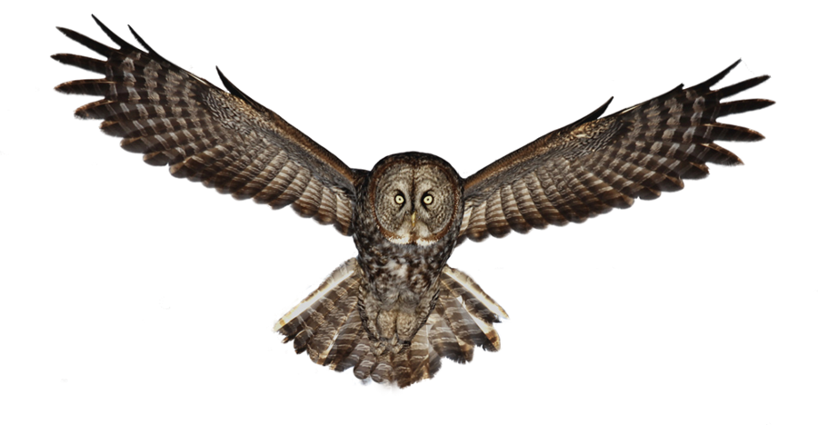 Flying owl png. By lg design on