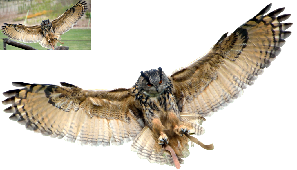 Flying owl png. Eagle by lumpi on