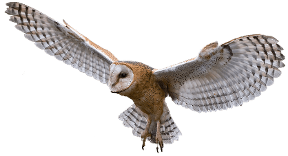 Owl flying png. Transparent stickpng