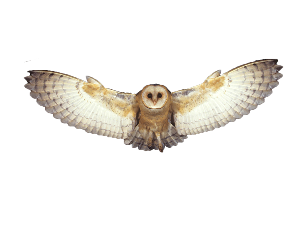 Flying owl png. By summerwinterdreams on deviantart